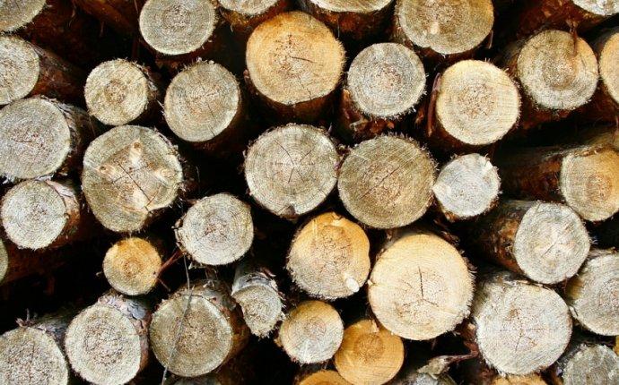 древесины решится в среду