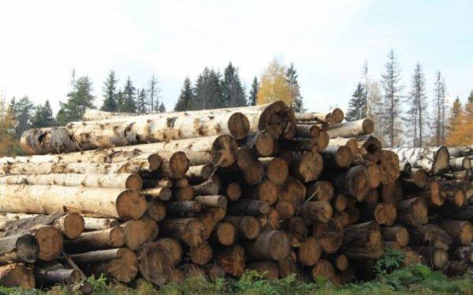 Деревообработка в России